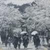 小浜公園での花見風景(昭和初期)